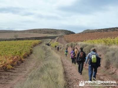 Enología en Rioja - Senderismo Camino de Santiago; burgos senderismo